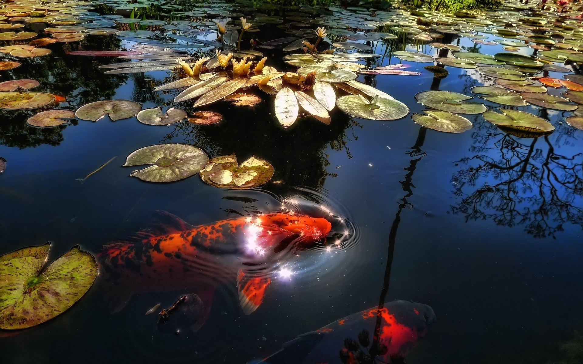Photography on pinterest perfectly timed photos for Koi fish water