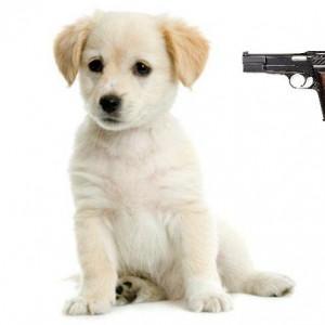 puppy-gun